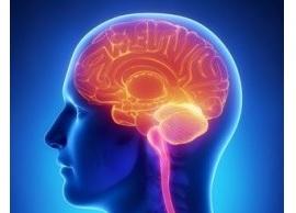 脳の興奮とソウロウ