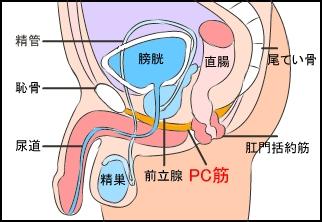 pc筋 早漏を治す方法